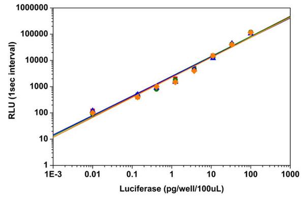 Amplite™螢光素酶報告基因檢測試劑盒