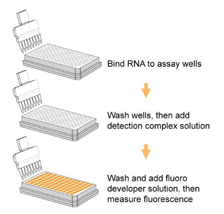 RNA 5mC操作步骤