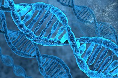 DNA编码