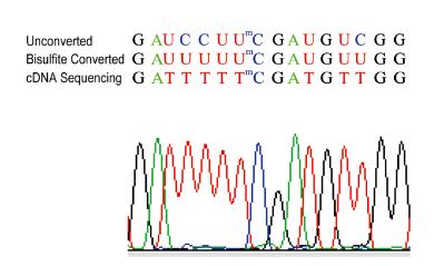 RNA亚硫酸氢盐测序分析