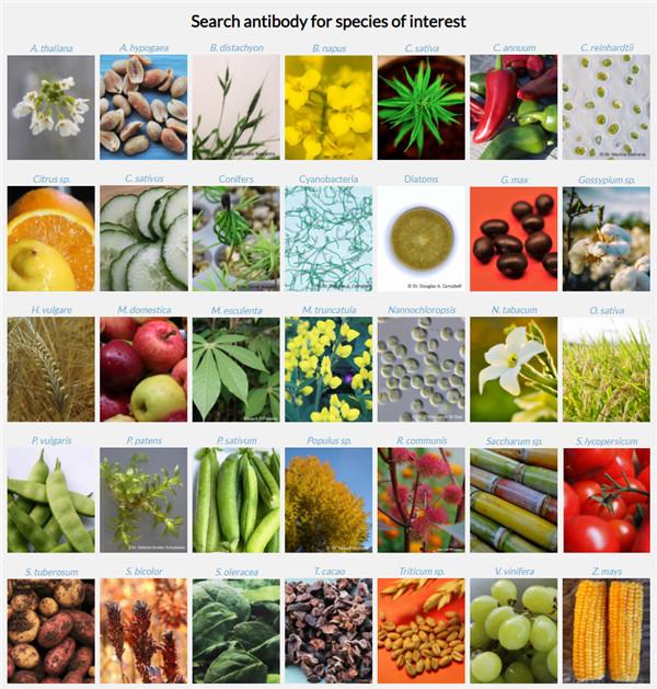 代谢物的吸收和植物对环境的反应