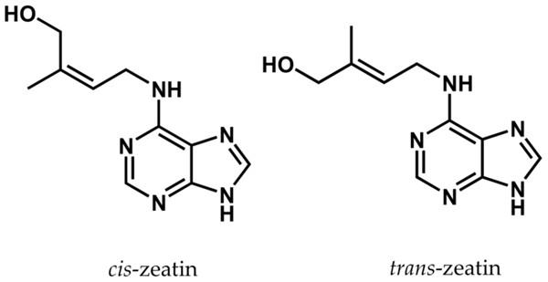 反玉米素和其衍生物-反玉米素核苷