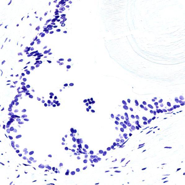 DNA倍性分析:Blue Feulgen DNA倍性分析染色试剂盒解决方案