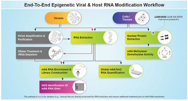 病毒RNA m6A甲基化研究流程
