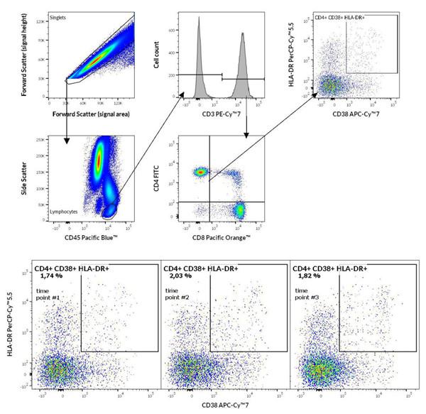CD4 +与CD8 + T淋巴细胞
