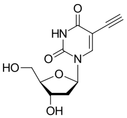 EdU(5-乙炔基-2'-脱氧尿苷)