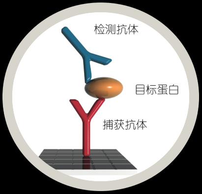 抗体对的检测原理示意图