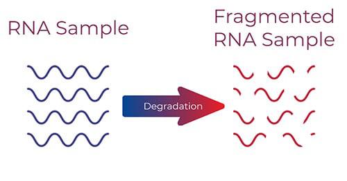 SARS-CoV-2病毒RNA提取