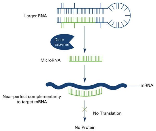 microRNA (miRNA)
