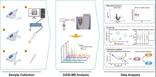 单溶酶体代谢组学分析平台
