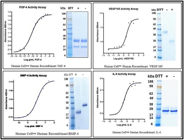 Human CellExp™蛋白產品線